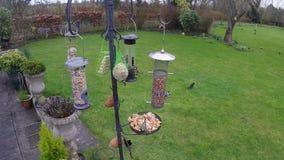 Trädgårds- fågelförlagematare stock video