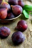 Trädgårds- figs arkivbilder