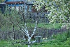 trädgårds- fjäder royaltyfria bilder