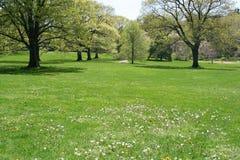 trädgårds- fjäder Arkivfoto
