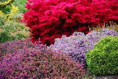 trädgårds- fjäder Royaltyfri Fotografi