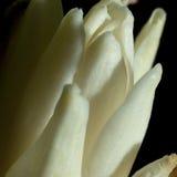 trädgårds- fjäderwhite för chrysanthemum arkivbild