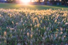 trädgårds- fred Royaltyfria Bilder