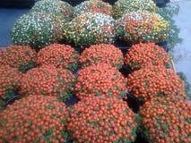 Trädgårds- garnering för härliga växter royaltyfria bilder