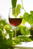 trädgårds- glass rött vin Arkivfoto