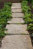 Trädgårds- gränd Arkivfoto