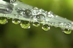 Trädgårds- gräs med vattensmå droppar Royaltyfri Fotografi