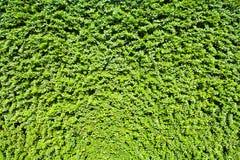 Trädgårds- gräsplansidavägg eller trädstaket för bakgrund Arkivbild
