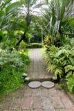 trädgårds- grön bana Arkivfoto