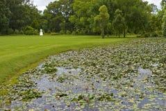 trädgårds- grön enorm plats Arkivfoto