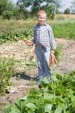 trädgårds- grönsak Arkivbild
