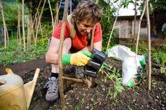 trädgårds- grönsak Royaltyfri Fotografi