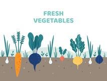 trädgårds- grönsak Arbeta i trädgården grönsaker mat, potatisträdgårdar och illustrationen för sommarträdgårdsmästarevektor vektor illustrationer