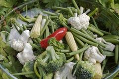 trädgårds- grönsaker Arkivbilder