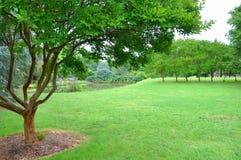 trädgårds- green arkivbild