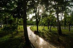 trädgårds- green Arkivfoton