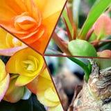 Trädgårds- guling blommar i blommakrocollage Arkivfoto