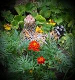 Trädgårds- höna Royaltyfria Bilder