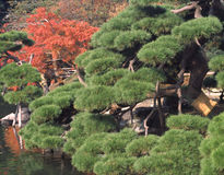 trädgårds- hamarikyu japan Arkivbild