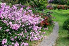trädgårds- horisontalväg royaltyfria bilder
