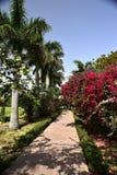 trädgårds- india Arkivfoto