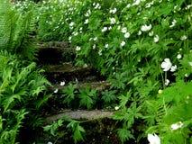 Trädgårds- ingång Arkivfoton