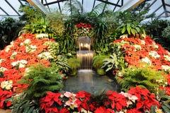 trädgårds- inomhus Arkivfoto