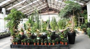 trädgårds- inomhus för drivhus Arkivfoto