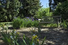 trädgårds- iris arkivbild