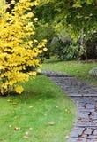trädgårds- japan för höst Royaltyfri Fotografi