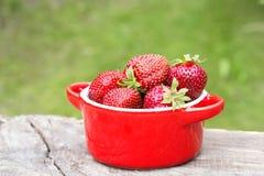 Trädgårds- jordgubbe i en keramisk kruka Royaltyfria Foton