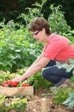 trädgårds- kökpensionärkvinna Arkivfoton