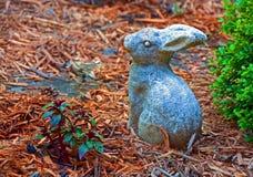 Trädgårds- kanin Arkivbild