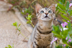 trädgårds- kattunge Royaltyfri Foto