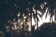 Trädgårds- kontur för palmträd på solig himmel Palmträd tonat foto Arkivfoto