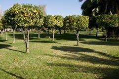 trädgårds- koutoubia marrakesh Arkivbilder
