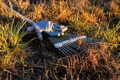 Trädgårds- krattar och handskar Arkivfoton