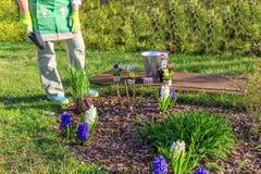 trädgårds- kvinnaworking Arkivfoto