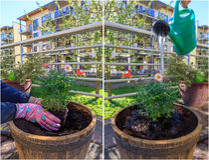 trädgårds- kvinnaworking Arkivbild