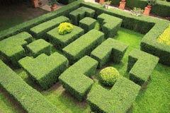Trädgårds- labyrint Arkivfoto