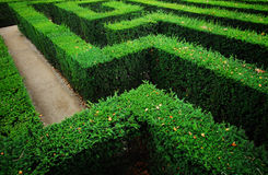 trädgårds- labyrint Arkivfoton