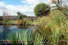 trädgårds- lagun Arkivbilder