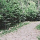 trädgårds- landskap Stenbana bland granträd och buskar arkivfoto