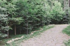 trädgårds- landskap Stenbana bland granträd och buskar royaltyfri fotografi
