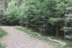 trädgårds- landskap Stenbana bland granträd och buskar royaltyfria foton