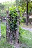 trädgårds- landskaptree för höst Fotografering för Bildbyråer
