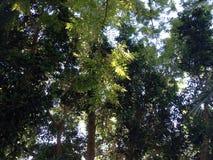 trädgårds- landskaptree för höst Royaltyfri Fotografi