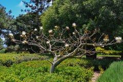 trädgårds- landskaptree för höst Royaltyfri Foto