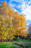 trädgårds- landskaptree för höst Arkivfoto