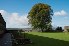 trädgårds- landskaptree för höst Royaltyfri Bild
